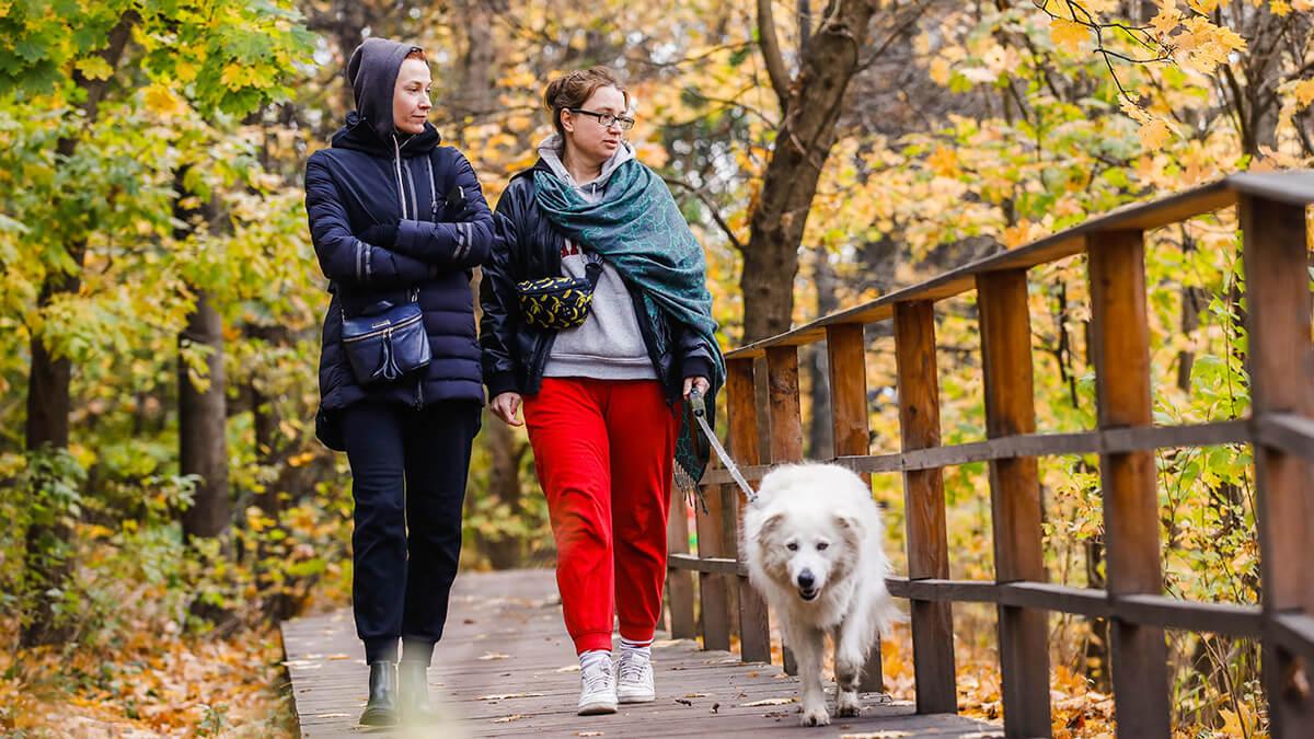 Прогулка с собакой осенью
