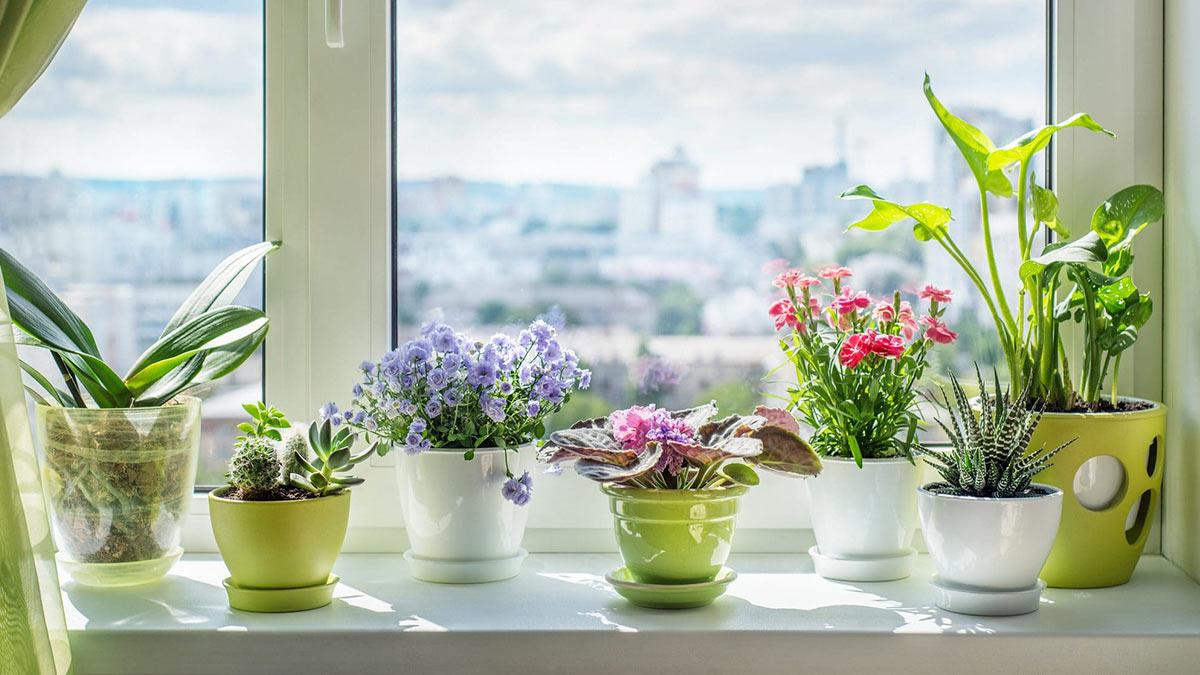 комнатные растения красиво цветут