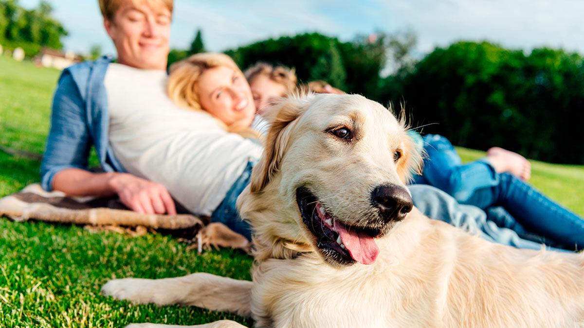 Породы собак для семьи с детьми