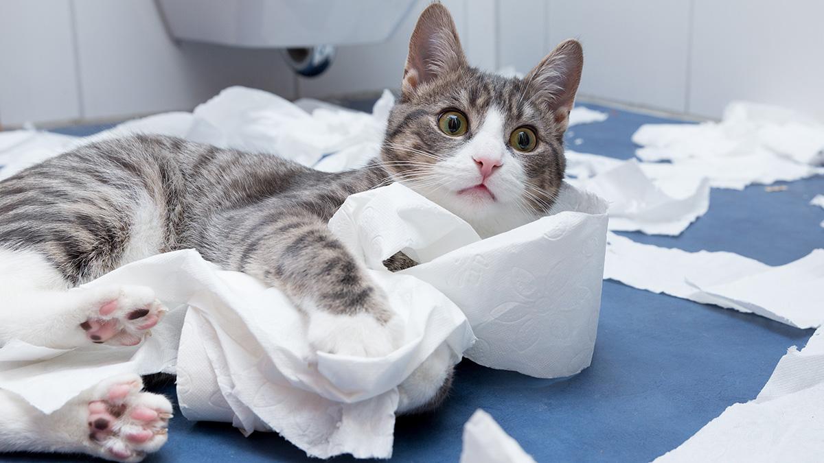 Почему кот хулиганит