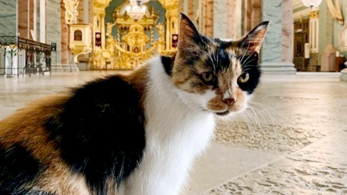 Кошка Капитолина