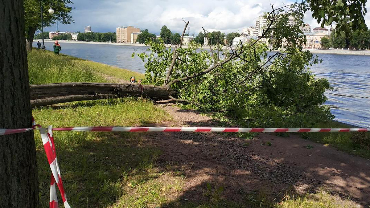 Санкт-Петербург город ветер шторм сломанное дерево