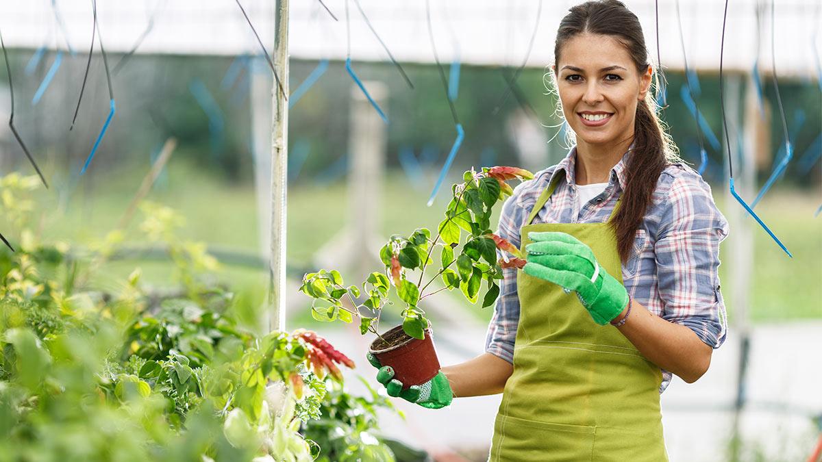 5 «бабушкиных» советов по садоводству