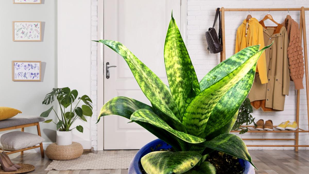 Комнатные растения для прихожей