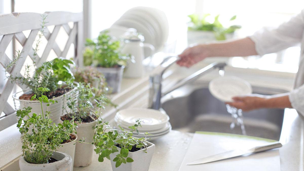 кухня растения в горшках