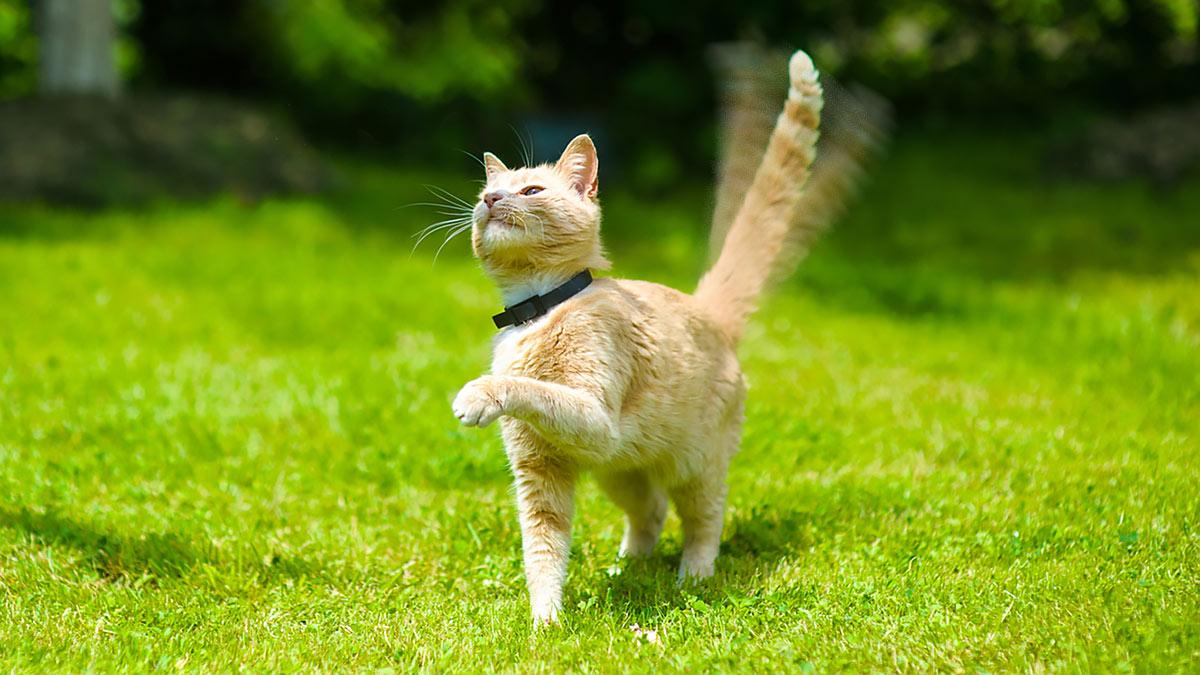 Сигналы кошачьего хвоста