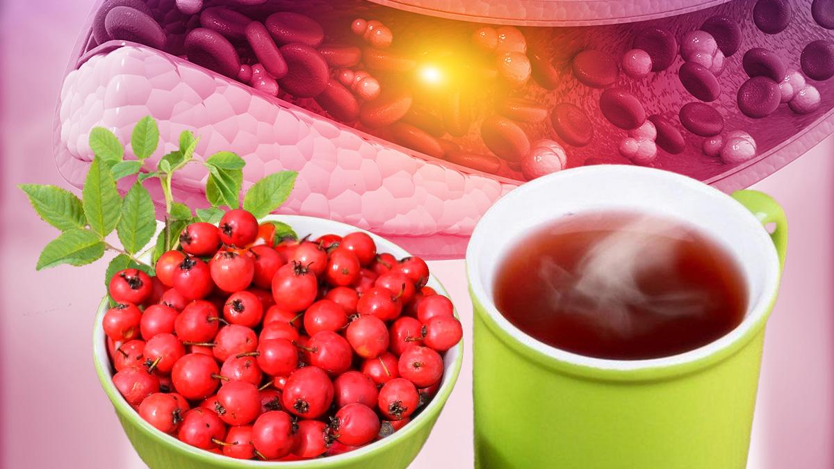 Польза чая из боярышника