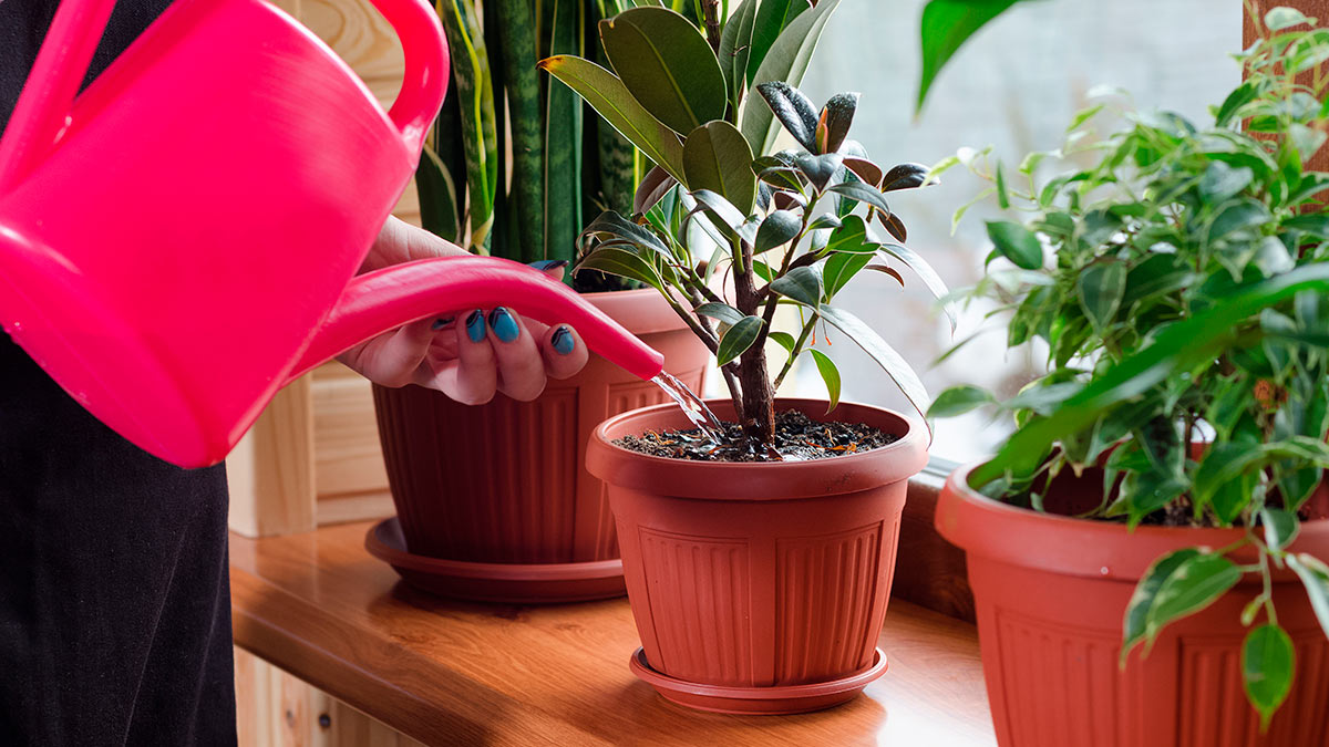 как часто поливать домашние растения