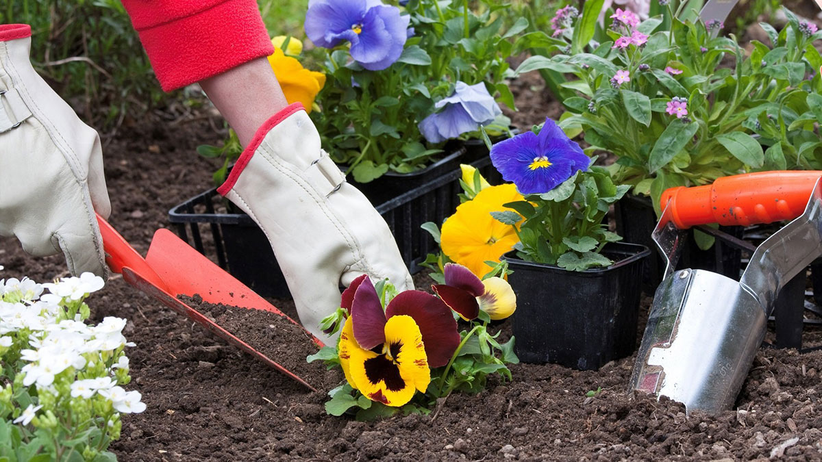 человек сажает цветы