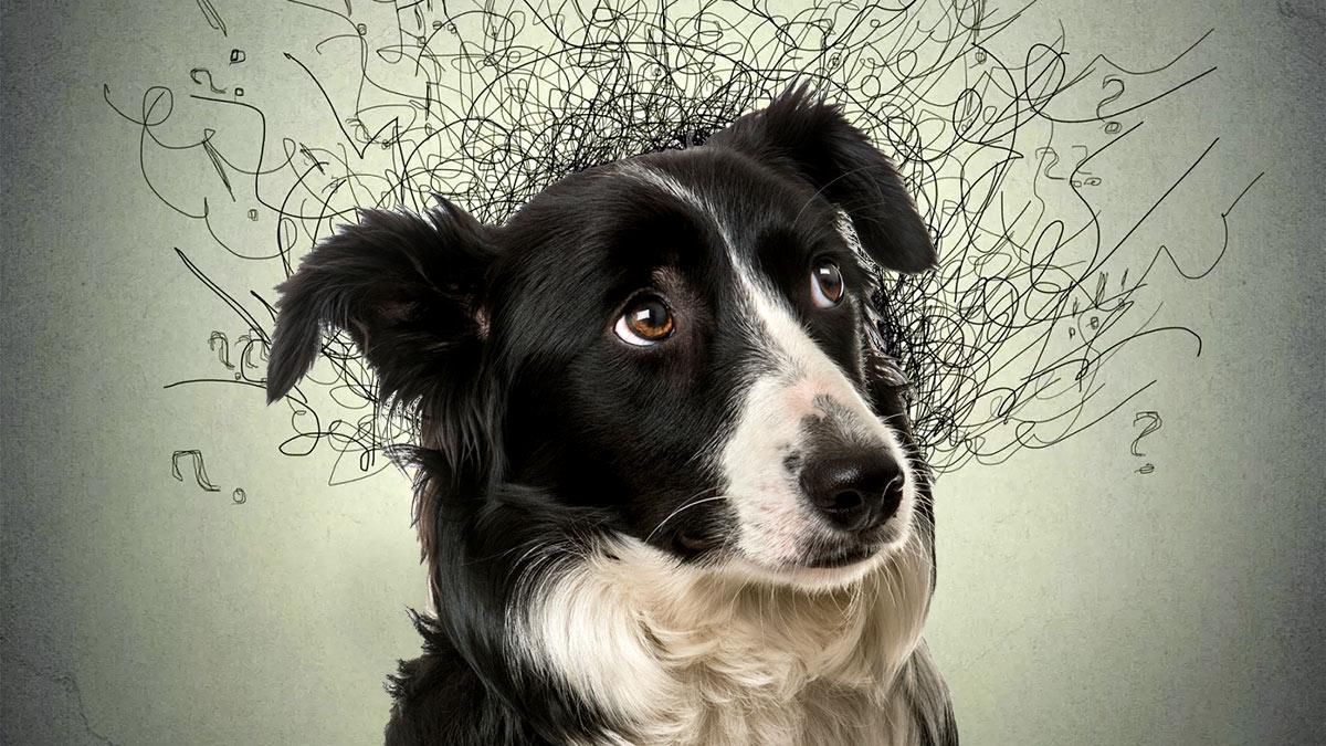 Самые тревожные породы собак