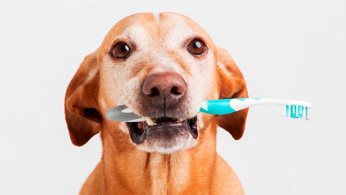 у собаки запах изо рта