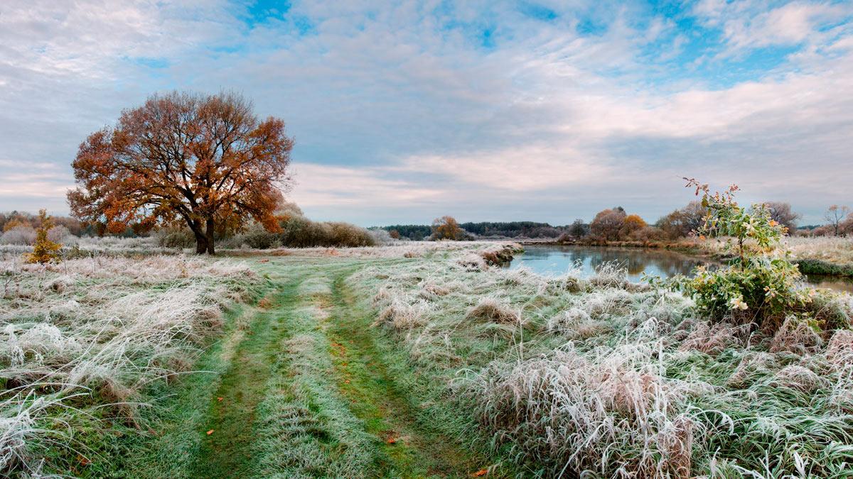 трава первые заморозки