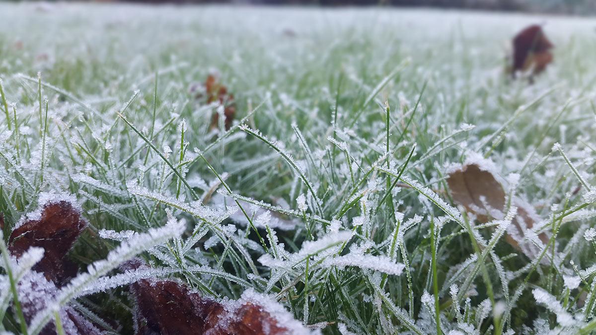 трава заморозки