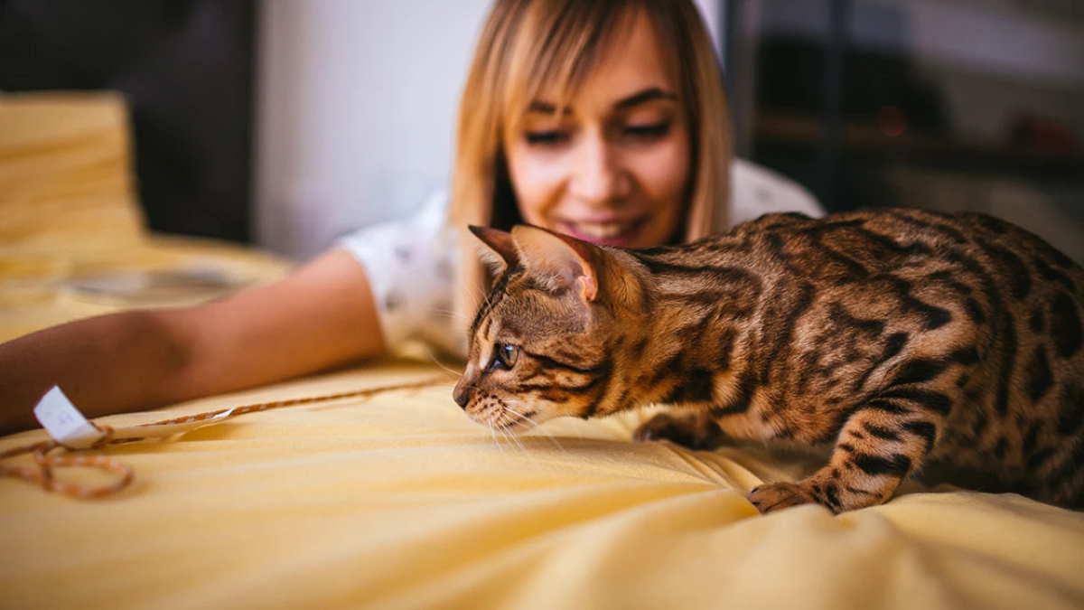 хозяйка играет с кошкой