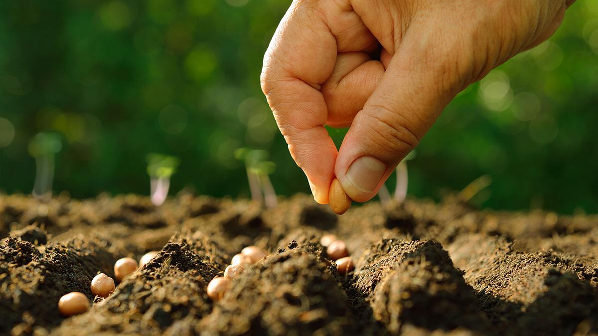 Посадки овощей осенью