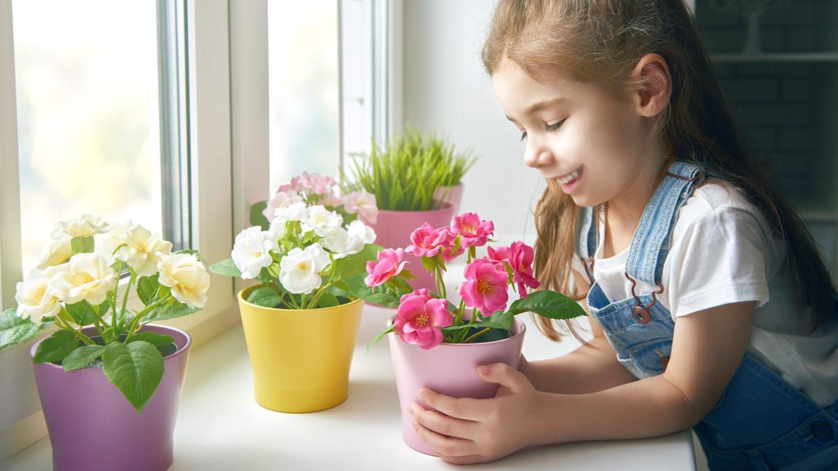 6 комнатных растений, цветущих осенью