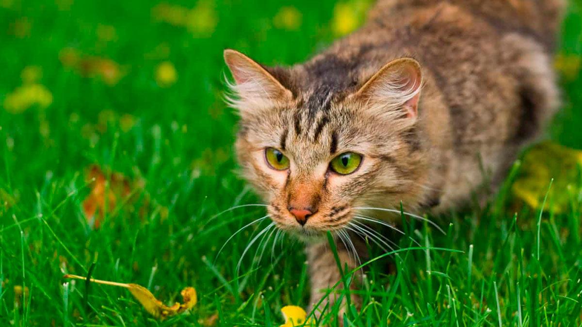 роль охоты в жизни кошек