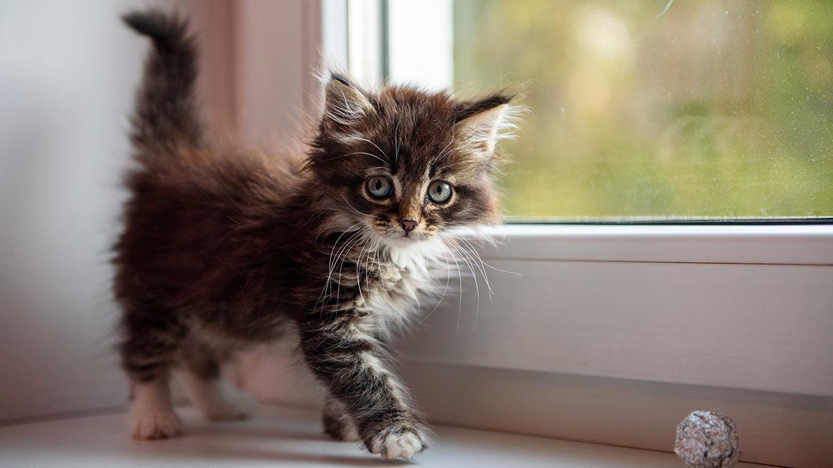 маленький котенок в доме