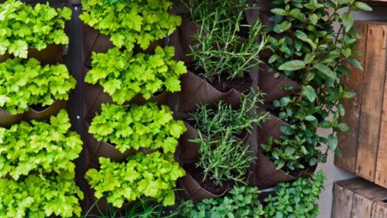 Вертикальное озеленение интерьера с войлоком
