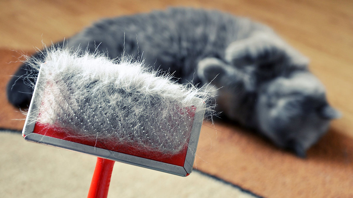Причины линьки у кошек