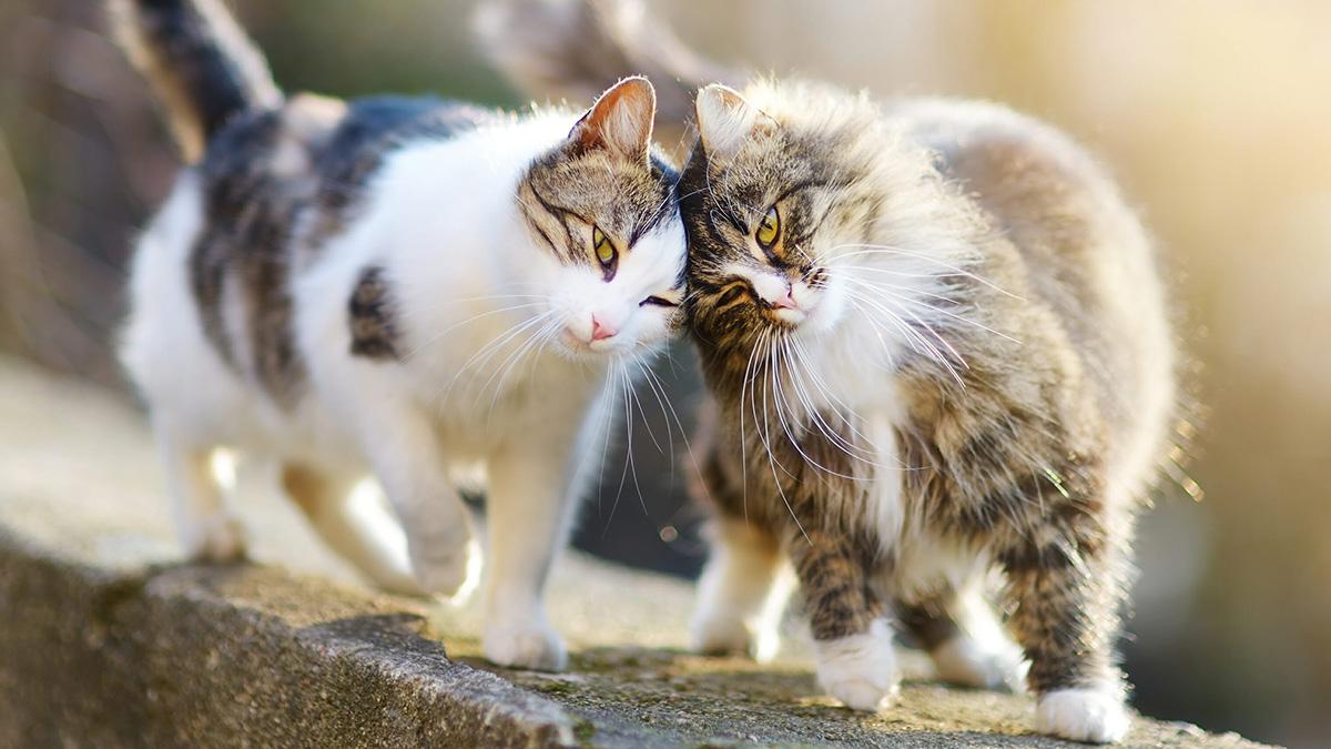 Породы дружелюбных кошек