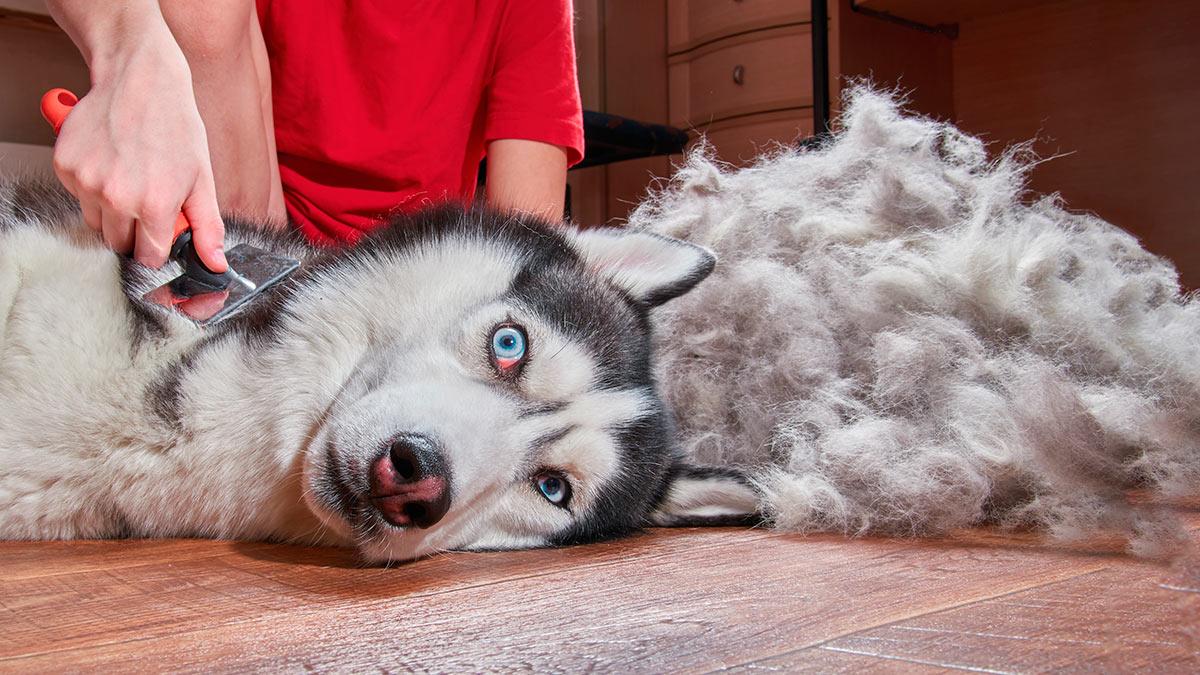 Собаки которые линяют больше всего