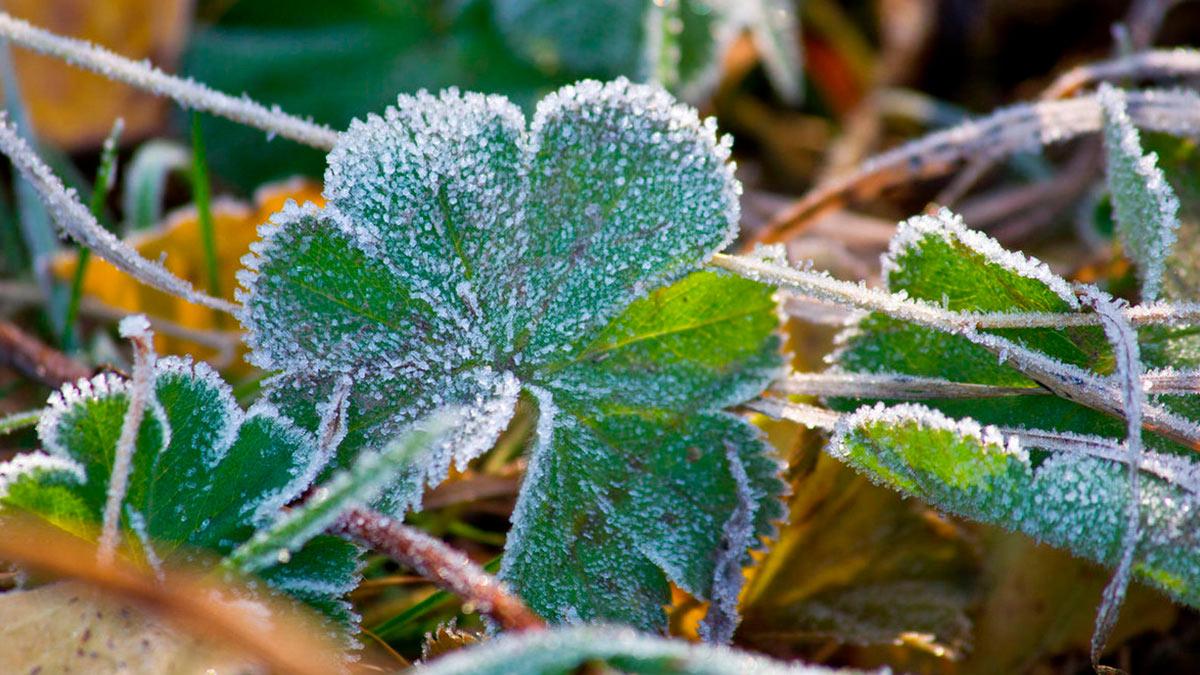 заморозки в огороде